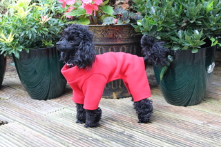 dog in red fleece onesie